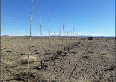 Vista de Terreno Complejo Zapala